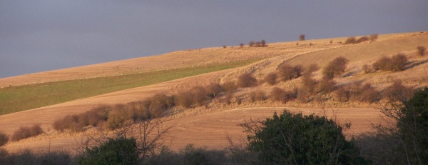 Downs view in January 2010